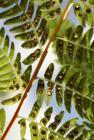 Duben - list kapradí
